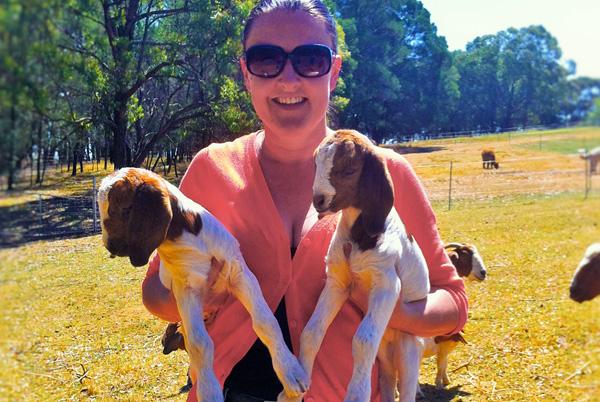 Madison Goats